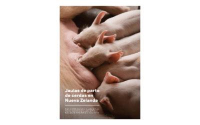 Report: sow crates – Spanish