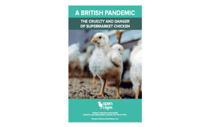 Report: supermarket chicken and pandemics